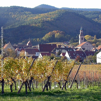 Riquewihr on the Alsace wine route is located at the foot of the Vosges Mountain.