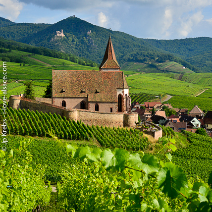 Summer in the vineyards. The neighbour village of Hunawihr and its medieval church surrounded by the vineyards.